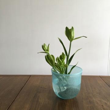 greenlily.JPG
