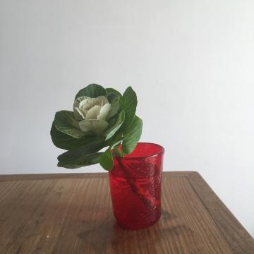 葉牡丹.JPG
